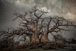 Berth Moon wykonywała zdjęcia do cyklu Dimond Nights w odległych miejscach Afryki południowej, w Botsfanie, Namibii i RPA.