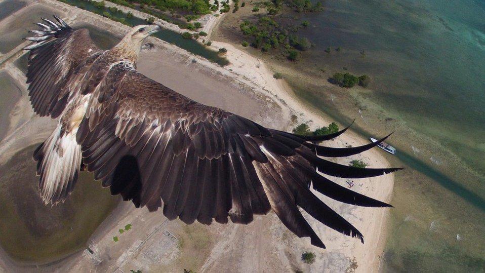 Najlepsza fota z drona