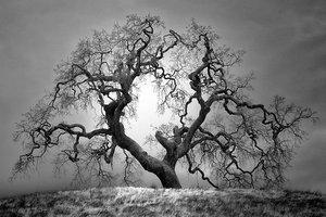 Nasze, ludzkie widzenie świata często taktujemy jako jedyne właściwe, nie znaczy to jednak, że świat widziany w trochę innym paśmie światła nie jest piękny. Może prezentować się dużo ciekawiej niż to co widzimy. Zdjęcia czarno białe wykorzystujące technikę podczerwieni to jeden z przykładów kreatywnego wykorzystania takiej fotografii.