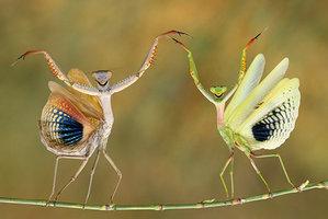Natura     Więcej ciekawych zdjęć znajdziecie na stronie [url=http://photography.nationalgeographic.com/photography/photo-contest/2014/]National Geographic Photo Contest 2014[/url]